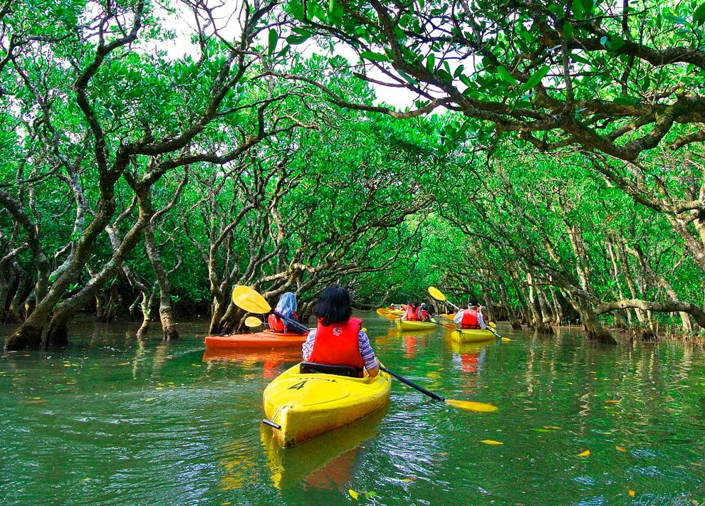 Manuel Antonio Mangrove kayak - The Mangrove Monkey Land